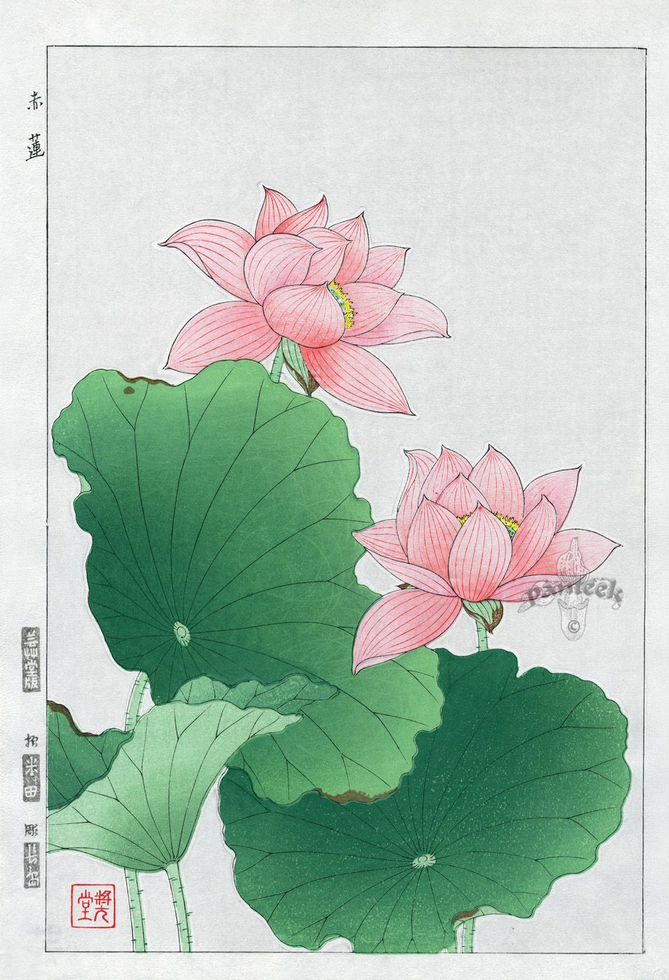 Water lily flower coloring pages - Water Lily From Shodo Kawarazaki Spring Flower Japanese Woodblock Prints