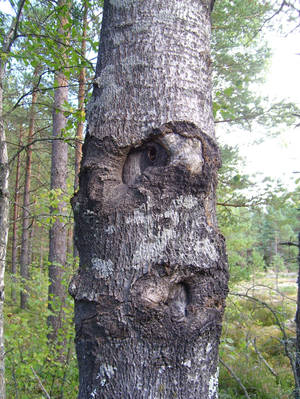 Trees. photo: Johanna Rehn