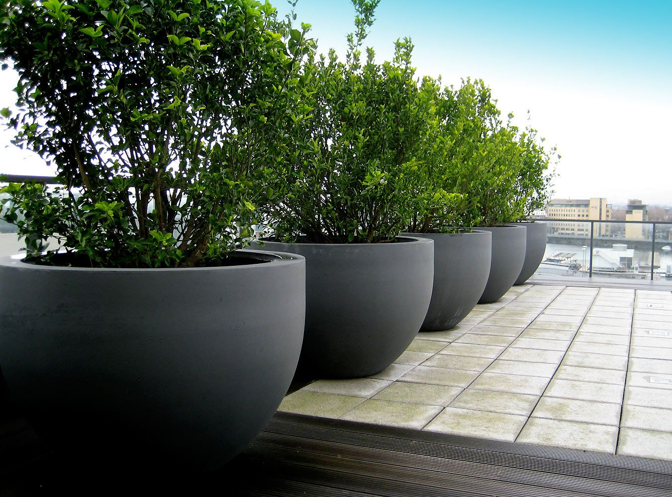 Urbis globe planters on roof terrace pinned to garden for Terrace trees