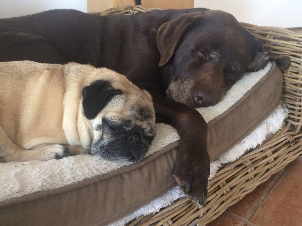 Neemshampoo Nicht Nur Bei Lausen Flohen Und Dem Hund Hunde