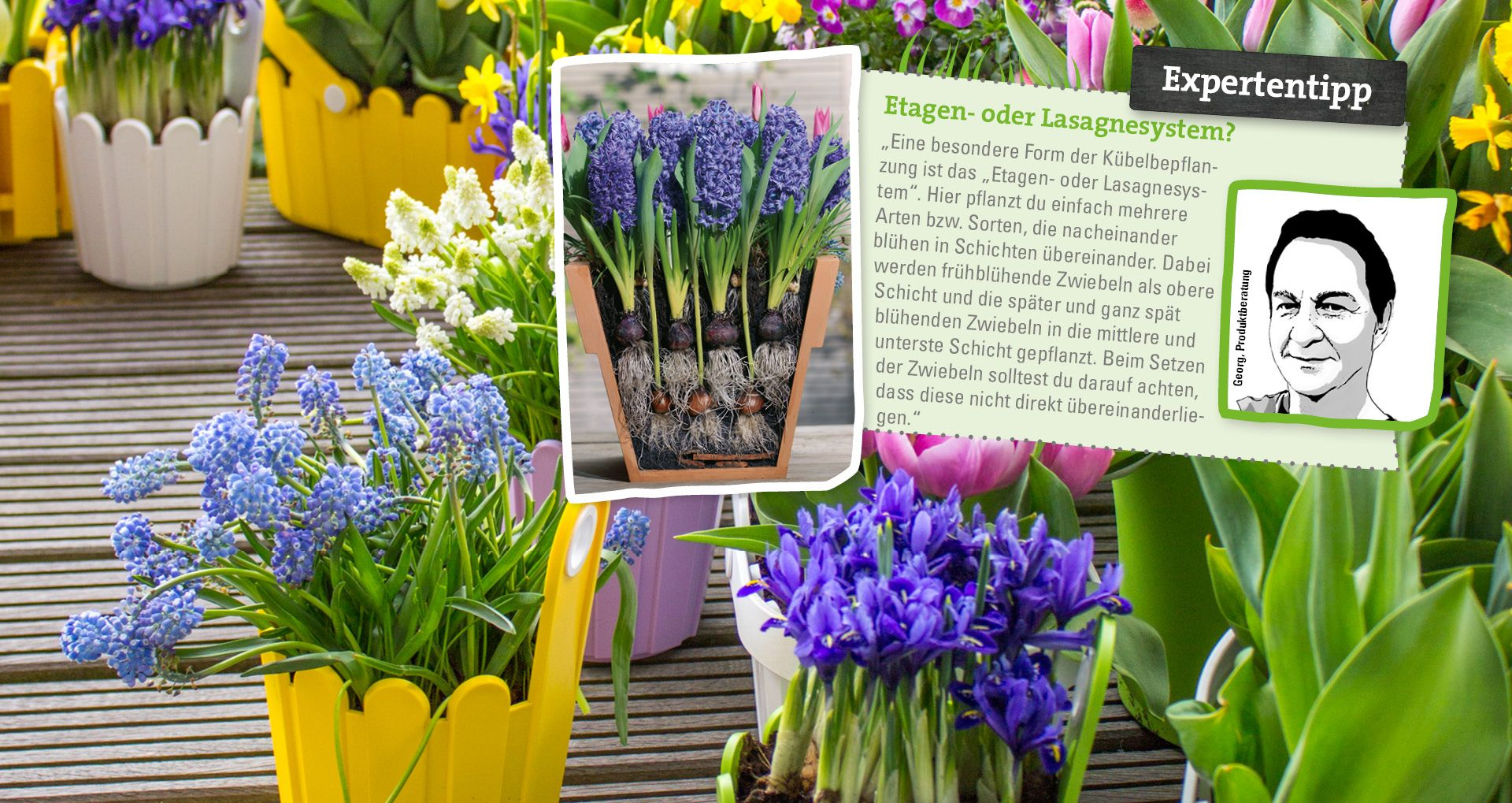 Blumenzwiebeln Richtig Pflanzen