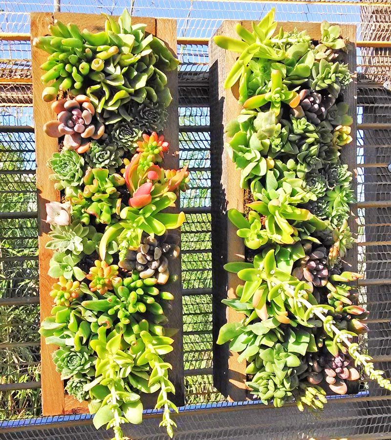 All Our Vertical Succulent Walls And Succulent Wall Panels Are Perfect For  Our San Francisco Bay Area Climate And Can Survive Indoor Or Outdoor With A  ...