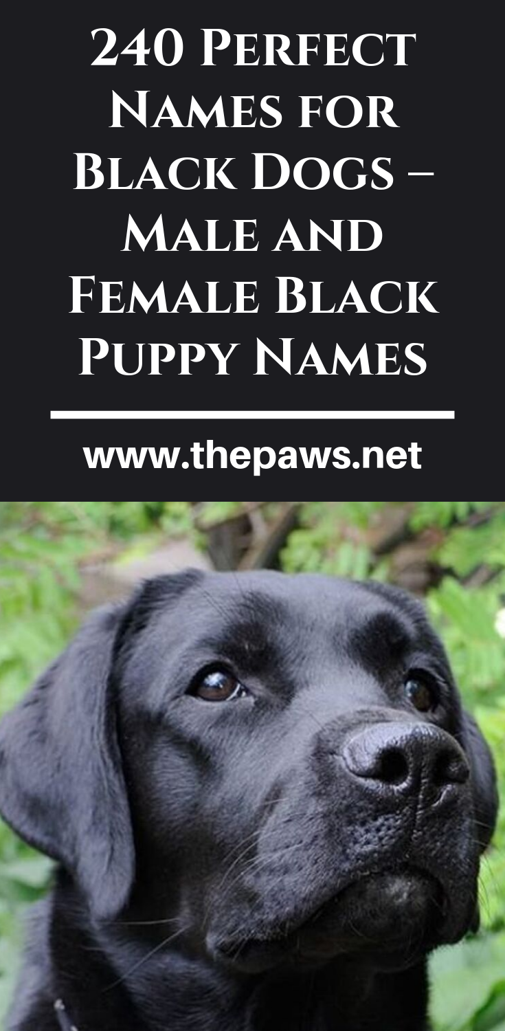 Pin On Dog Names Unique