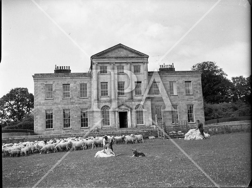Image Of 1960 09 06 Sheepshearing At Charleville House B848 777 Jpg Irish Photo Archive Photo Wicklow Photo Archive
