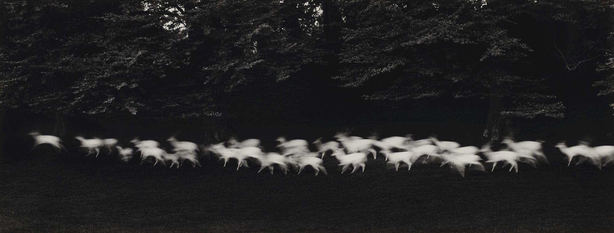 Paul Caponigro   Running White Deer, Wicklow, Ireland, 1967