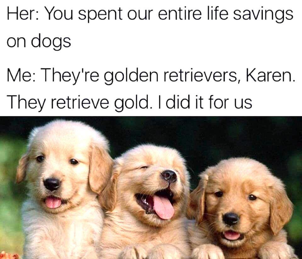 Dog Memes Funny Dog Memes On Funnydogs Topdogs Dogmemes Cutedog Cutepuppys Cutedogs Funny Dog Memes Funny Dogs Funny Animal Memes