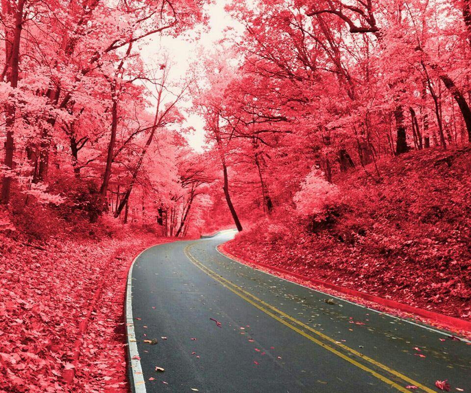 Bosque Rojo De Chernobyl Nature Pictures Beautiful Nature Nature