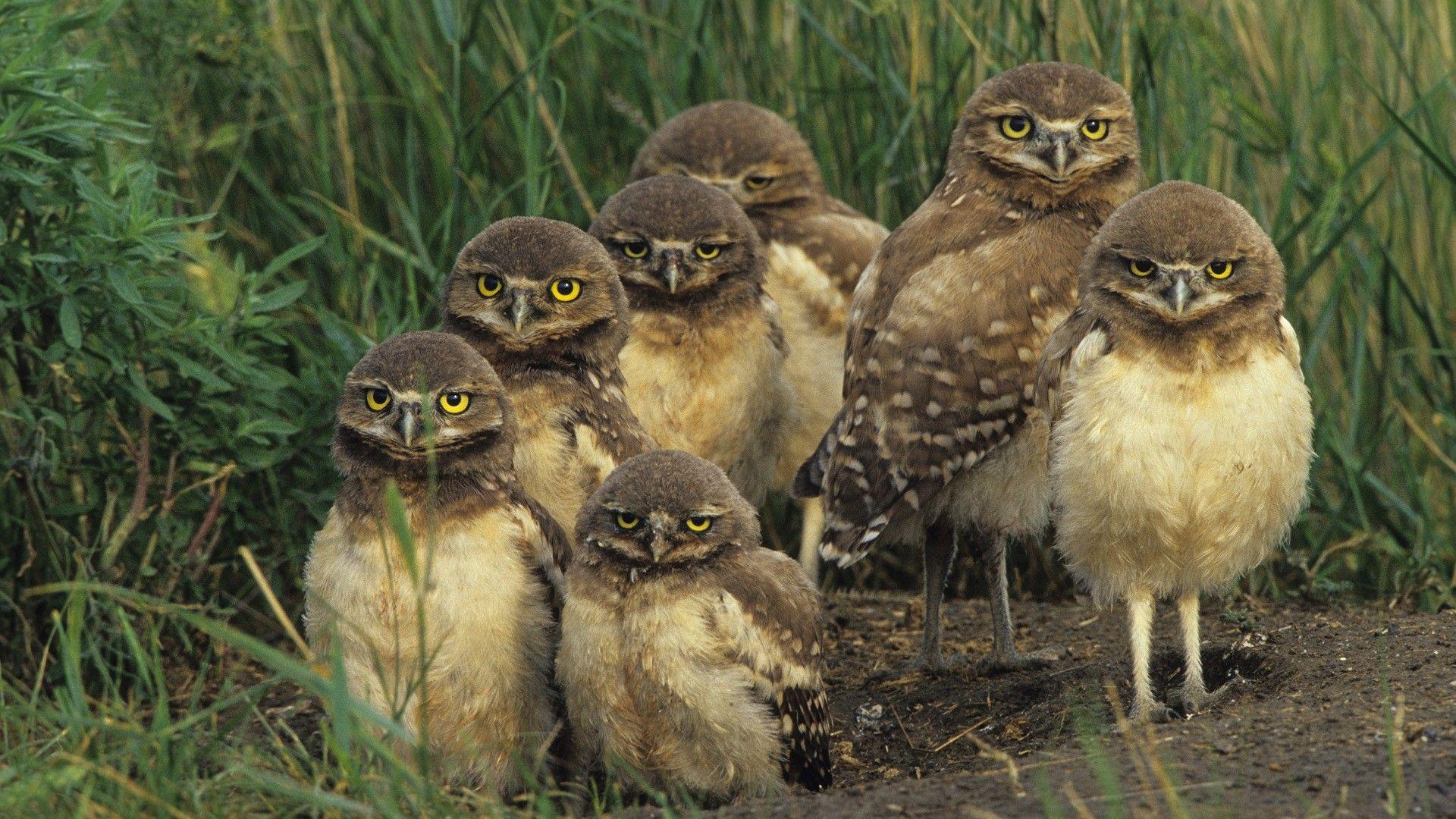 birds wild life birds wildlife owls baby birds 1920x1080 hdbirds wild life birds wildlife owls baby birds 1920x1080 hd wallpaper free downloads
