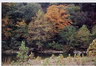 River_View_from_Cabin_12_2 by Harman's Luxury Log Cabins, via Flickr