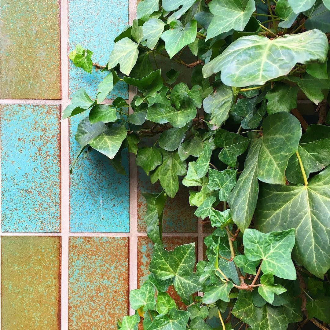 Sülzburgstraße :: Carreau de Cologne #carreaudecologne #tilesofcologne #koelschefliesen #fliesen #tiles #carrelage #ihavethisthingwithtiles #tileaddiction #ihaveathingforwalls #köln #kölle #cologne #visitkoeln #hiddencologne #thisiscologne #koelnergram #365cologne #koelscheecken #liebedeinestadt #kölnarchitektur  #architecture #facade #texture #minimalism #grid #vscocam #efeu #plantsonplantsonplants #greenwall #plantsofinstagram by carreau_de_cologne