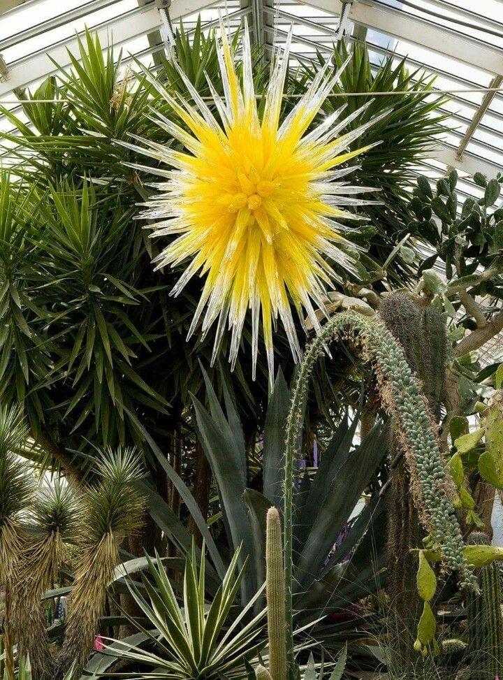 Épinglé par Mazef Anita sur fleurs et plantes géantes en