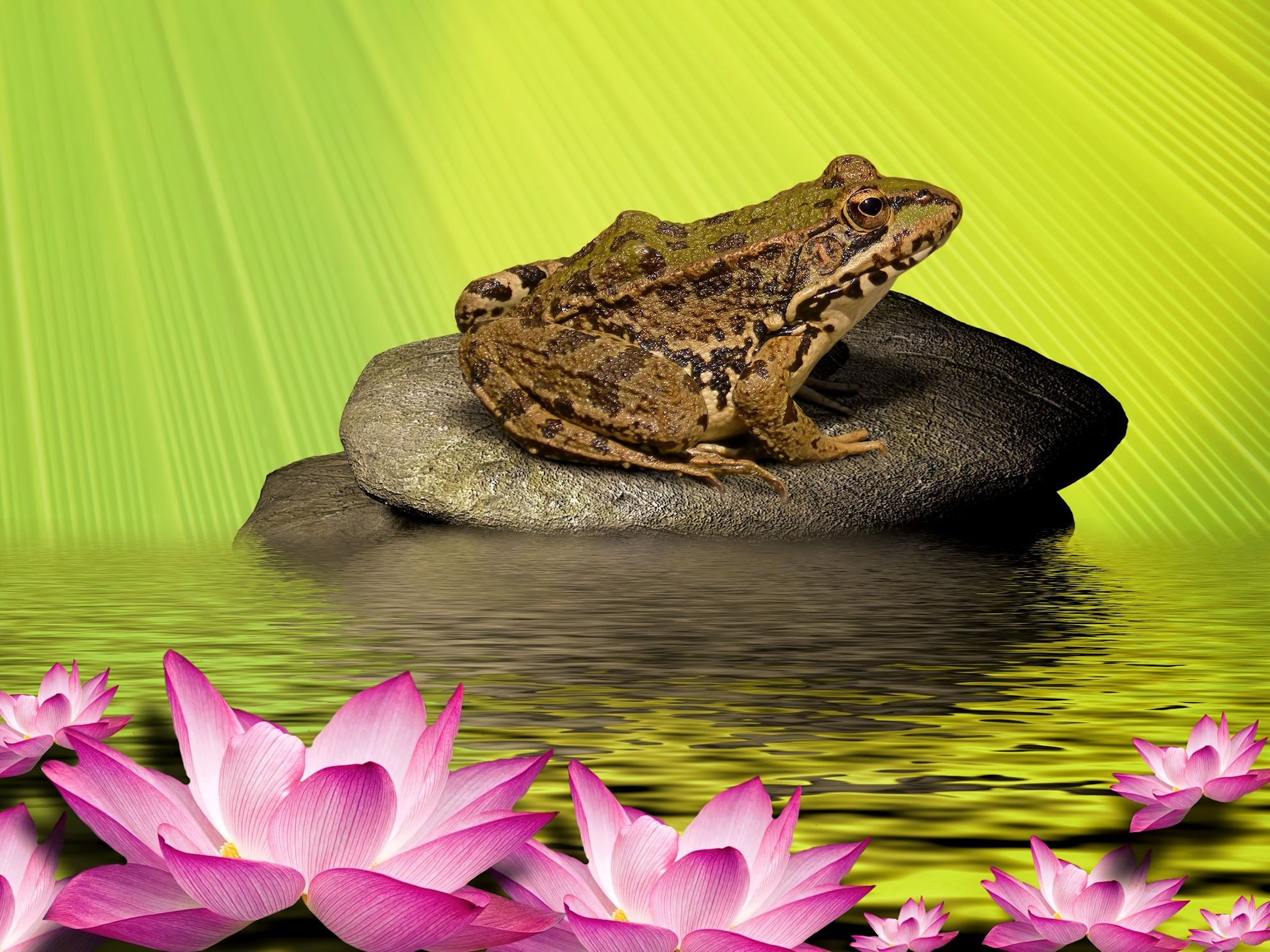 frog-1463266.jpg (1982×1486)