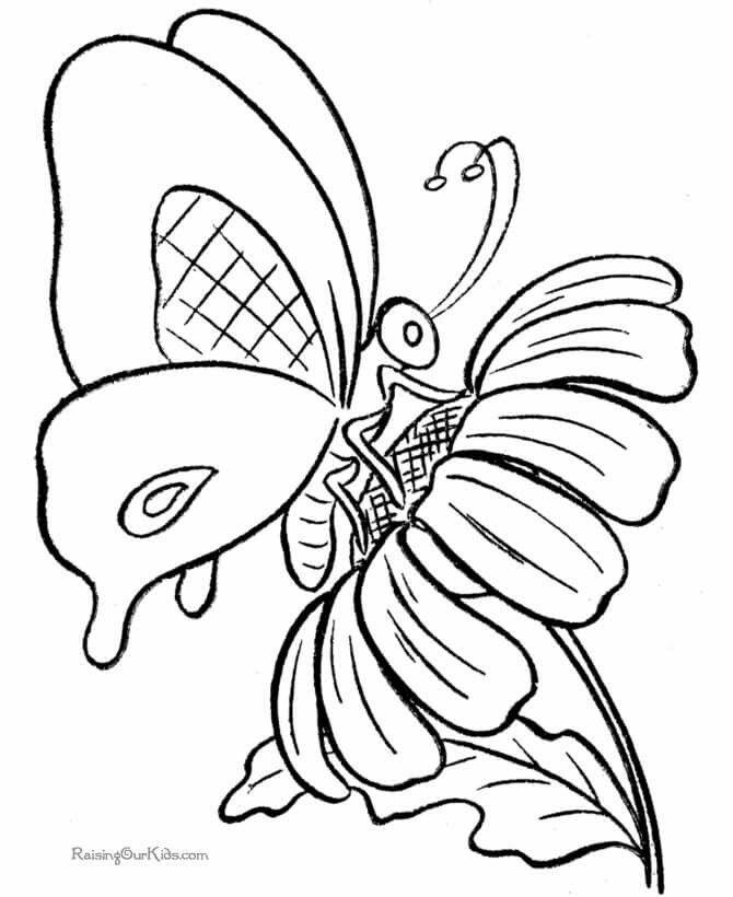 Картинка для раскрашивания бабочка на цветке