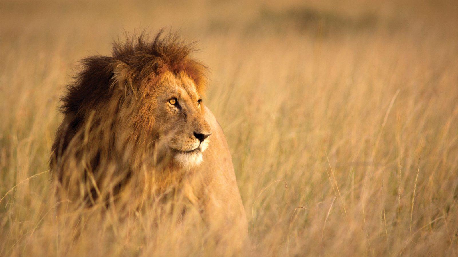 Masa Masa, Kenya
