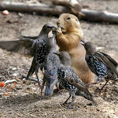 animal best friends | animals best friends cool picture funny animal pictures everyone loves ...
