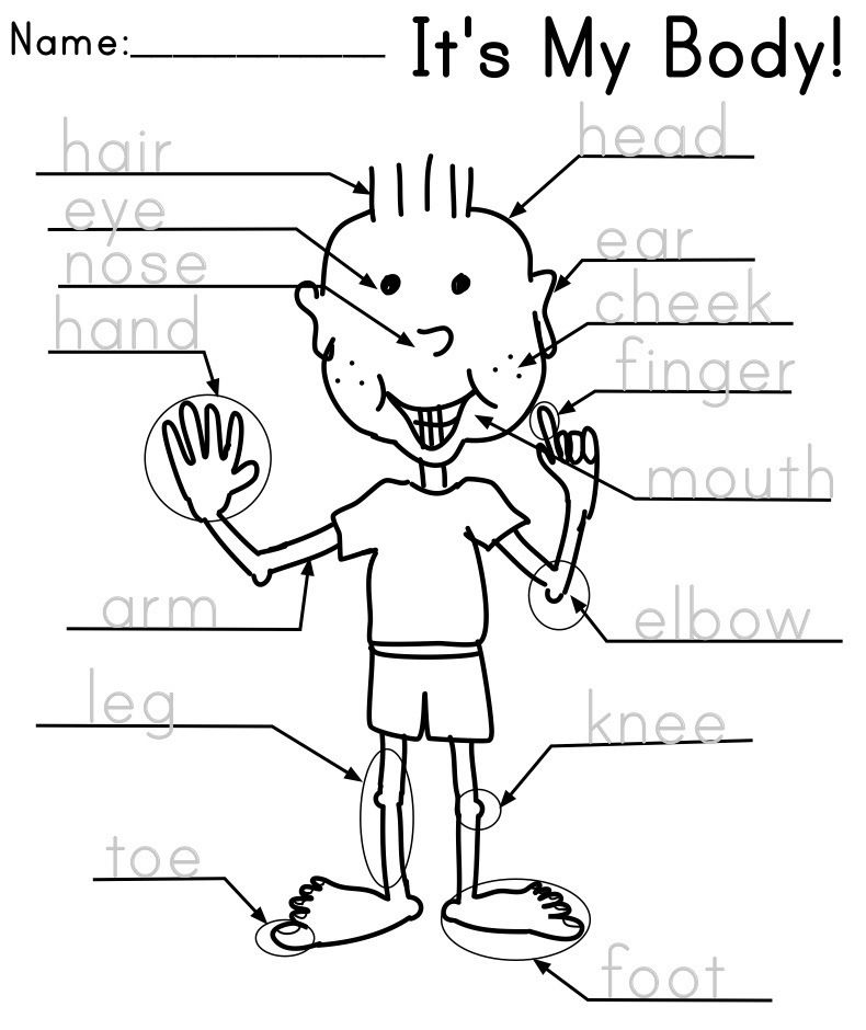 Parts of the Body – Kindergarten English Worksheets