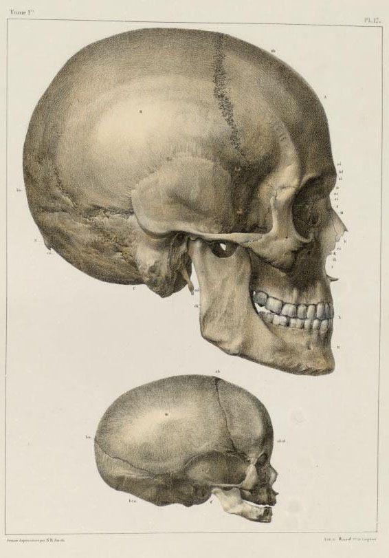 самых картинки анатомический черепа позже объявили разработчики