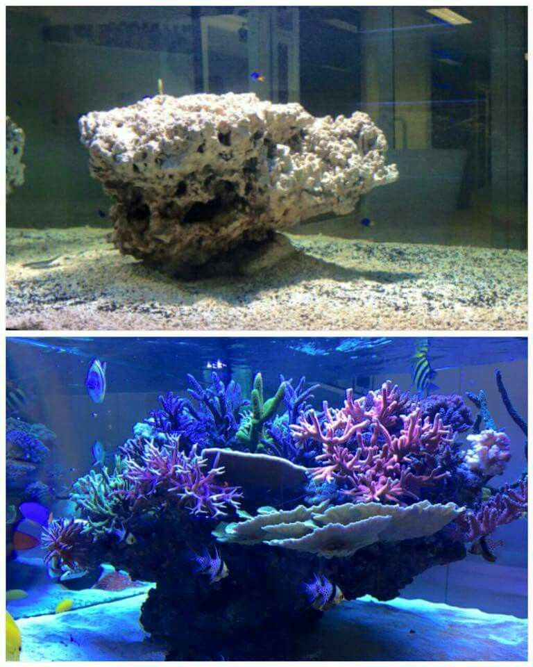 Aquascape | fish | Saltwater aquarium fish, Saltwater fish ...