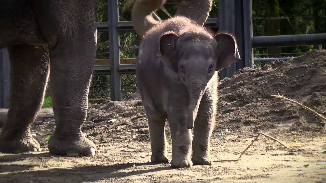 Lily at two months Zoo babies, Elephant, Elephant habitat