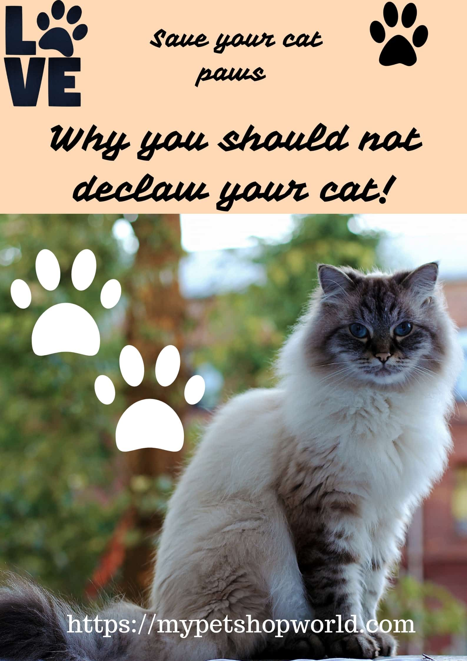 Do Celebrities Declaw Their Cats Animal Society Cats Declawing Cats