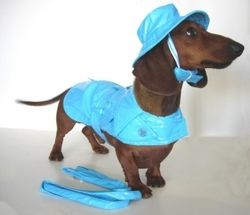 Dachshund Apparel Designer Rain Coat W Matching Hat Blue Dog