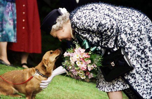Queen Elizabeth greets a canine fan