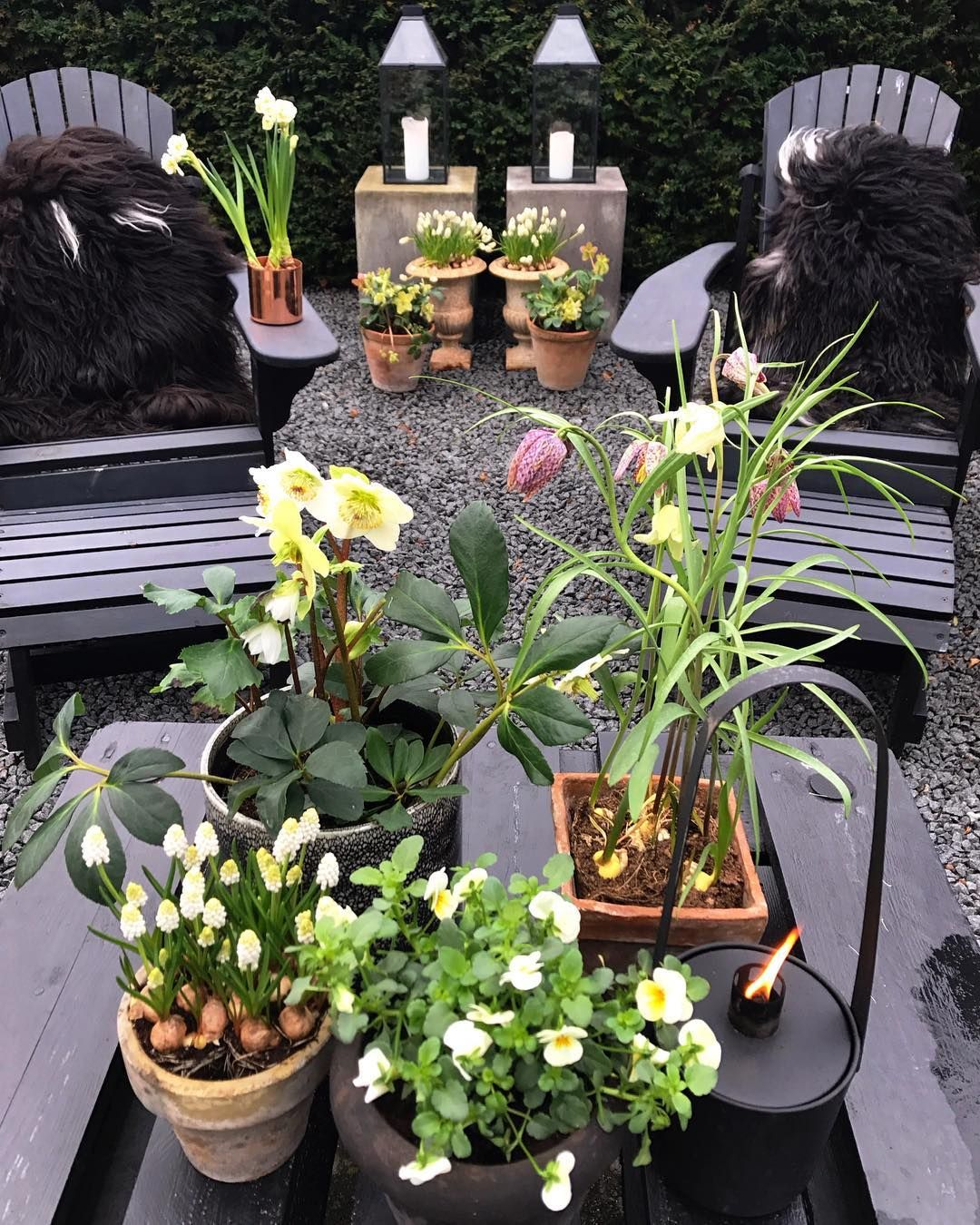 Spring is getting closer ????????????????????Warming up with spring flowers in pots ????????  #springtime #pots:
