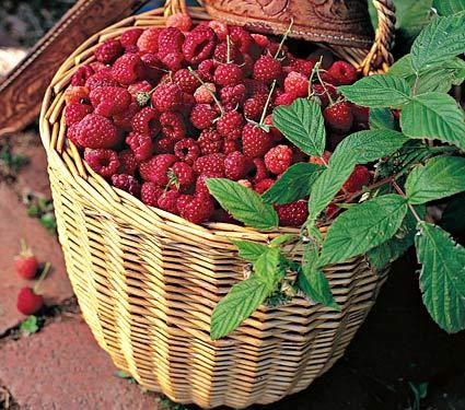raspberries in the yard