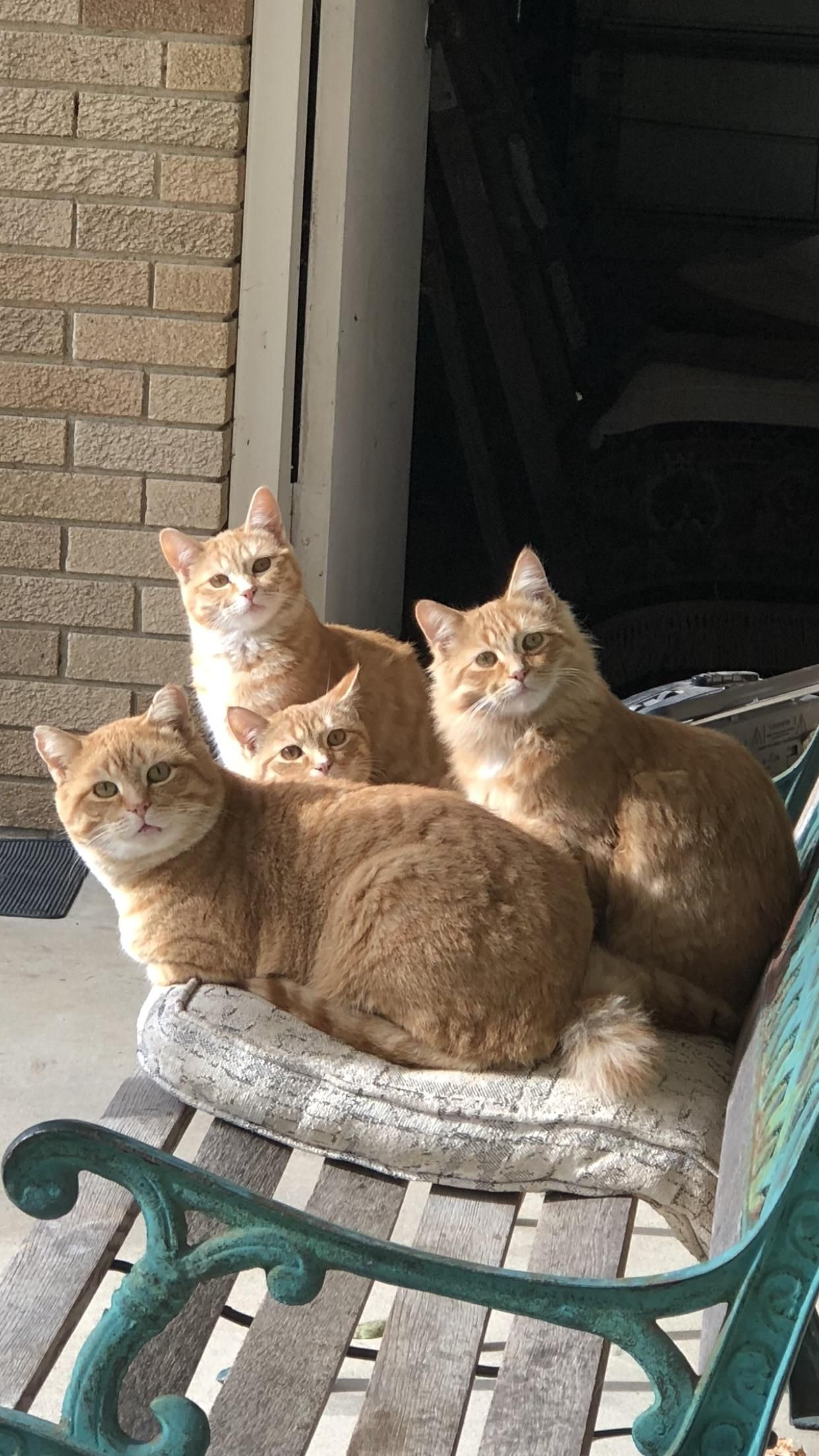 this is a family of wild cats my girlfriends dad takes