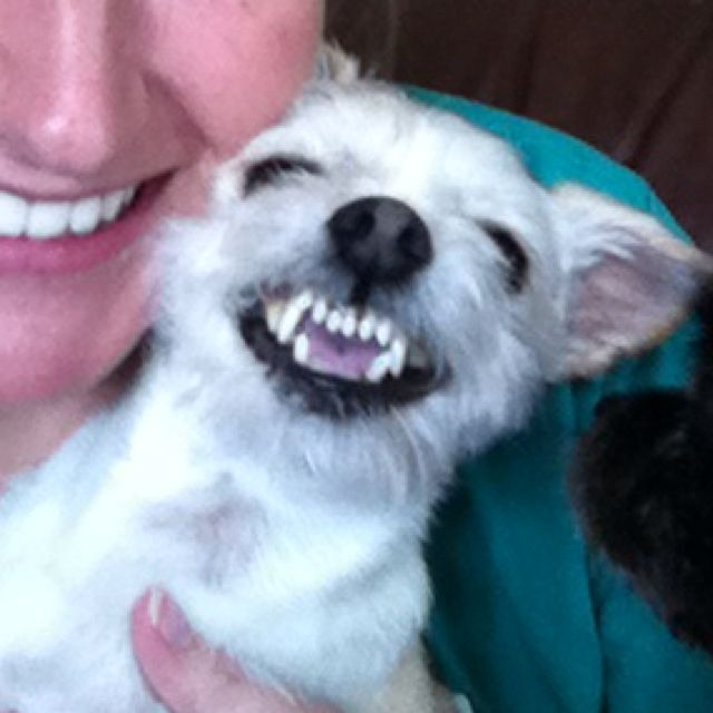Smiling Doggie Rosco From Alabama Doggy Dogs Animals