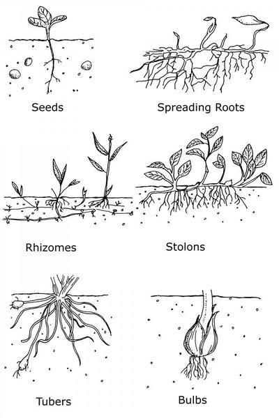 Pin on Gardening/Outdoor