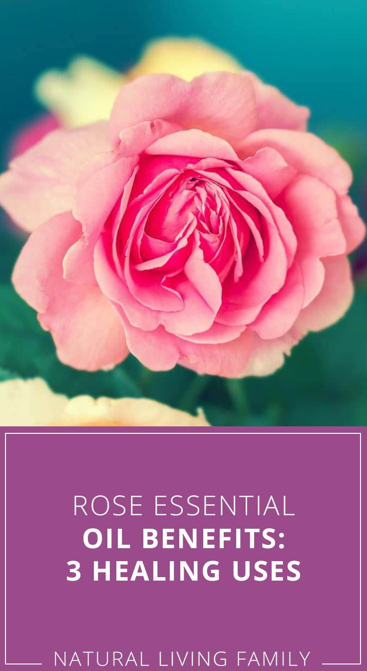 Rose Essential Oil Benefits 3 Healing Uses In 2020 Essential Oil Benefits Rose Essential Oil Oil Benefits