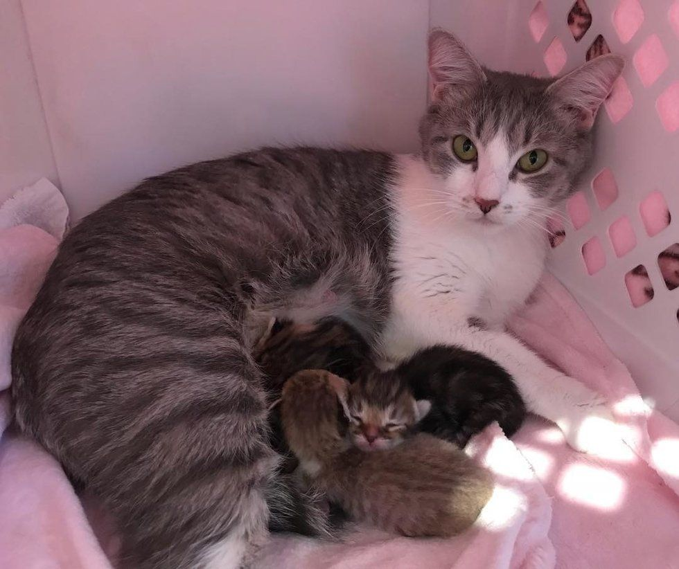 Cat Mom Found As Stray Won T Leave Her Kittens Until She Finds Someone She Trusts Love Meow Kittens Cats Animal Welfare Society