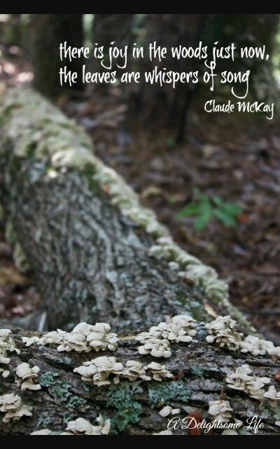 Woods quote | Into the woods quotes, Quotes, Walk in the woods