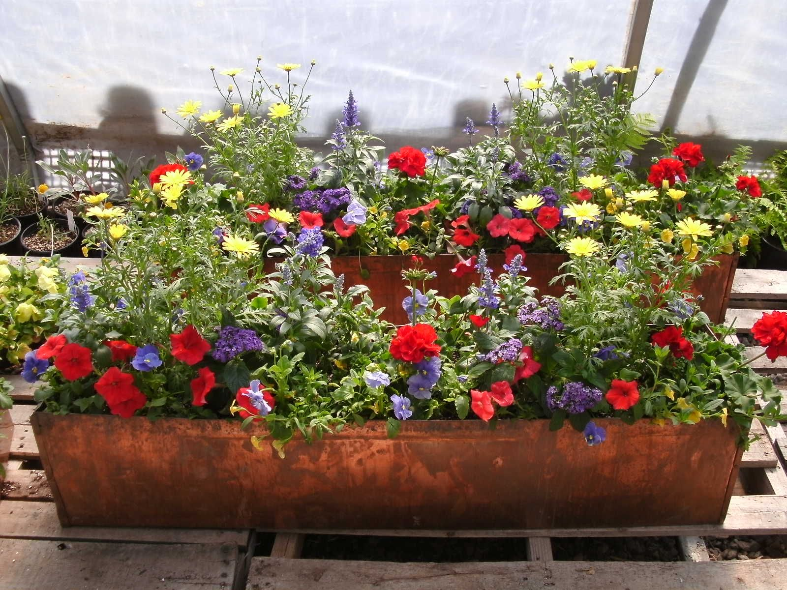 Custom window box planting in a gorgeous copper box by Colorado
