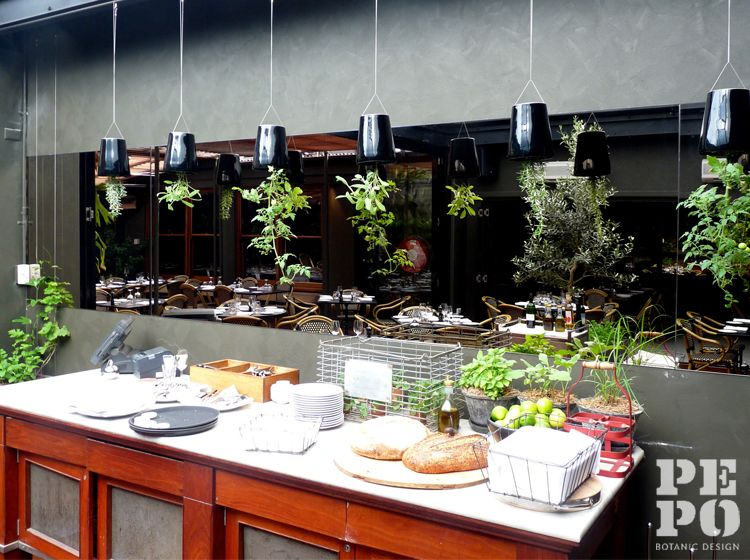 Restaurant planting design with suspended planters Smiths