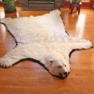 10 5 Foot Polar Bear Rug This Would Look Great In Front Of A Fireplace In A Ski Cabin Bearskinworld Com Bear Skin Rug Bear Rug Animal Fur Rugs