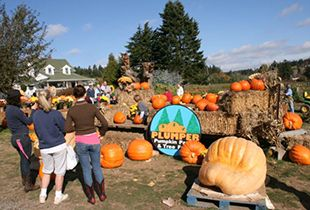 Pin On Tualatin Valley Pumpkin Patches