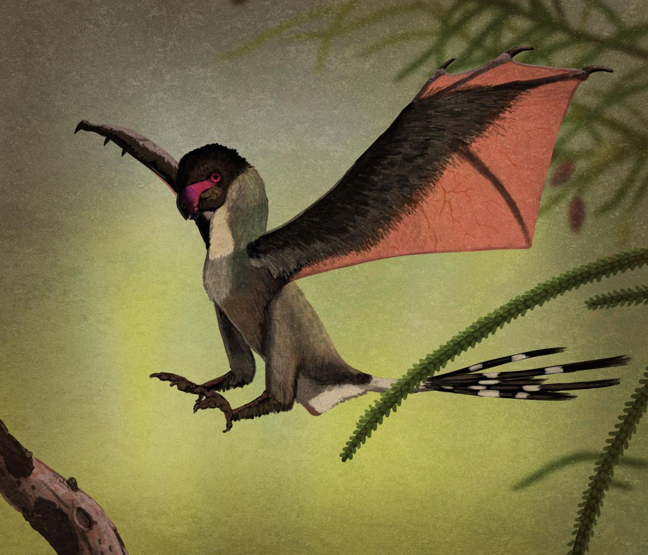 Yi qi is a newly discovered birdy-theropod with membranous wing-y things. Unlike what you'll see in a lot of reconstructions, there's no reason to think it was a particularly angry animal.