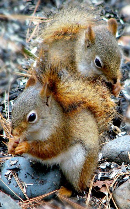 Feelin Squirrely Group Board Cute Animals Animals Beautiful Cute Squirrel
