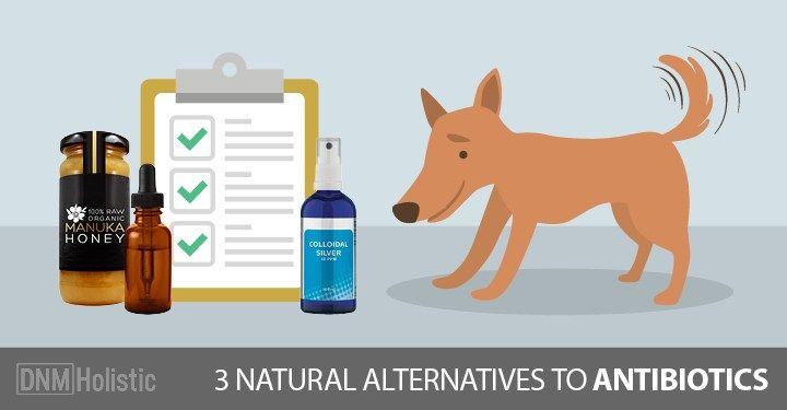 3 Natural Antibiotics For Your Dog Natural antibiotics