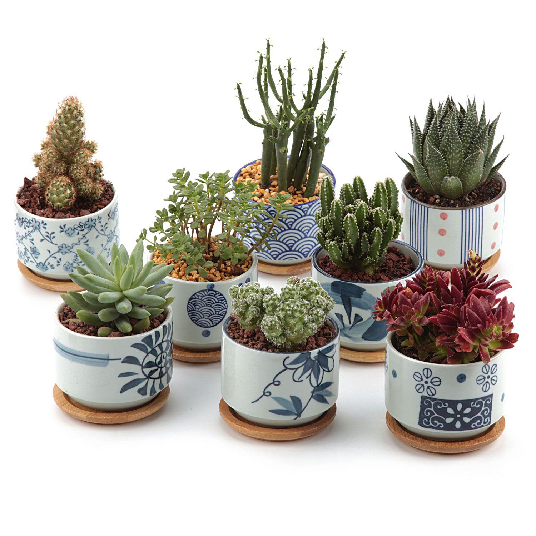 T4u Ceramic Succulent Plant Pots Mini Flower Pot Planter Bonsai Pot Japan Stil Cactus Plant Pots Ceramic Succulent Planter Succulent Planter Diy