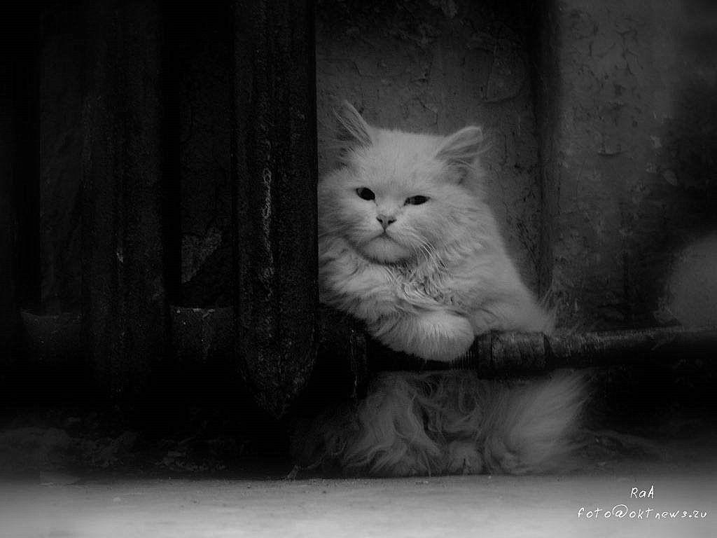 photo: Одиночество... | photographer: Владимир Кочкин | WWW.PHOTODOM.COM