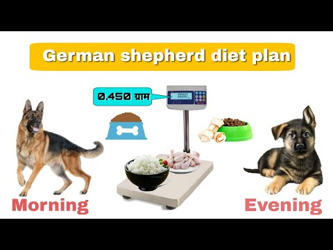 401 German Shepherd Full Diet Plan Homemade Food For Dogs German Shepherd Chart In Hindi Youtube In 2020 Shepherds Diet Dog Food Recipes Homemade Recipes