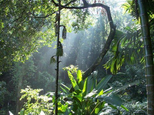 Jungle....