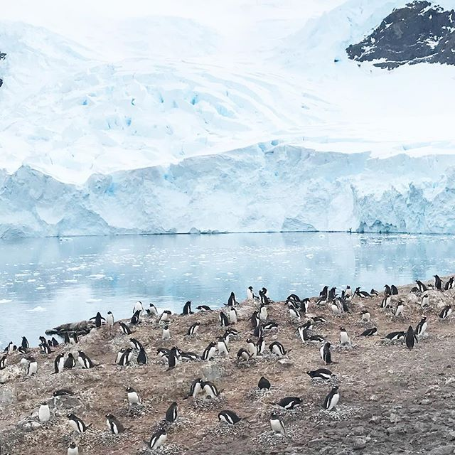 as you may have noticed @_thewino has been pretty out of touch and thats because shes sailing around the antarctic peninsula! today she got to visit with these little jokers! #beautifuldestinations