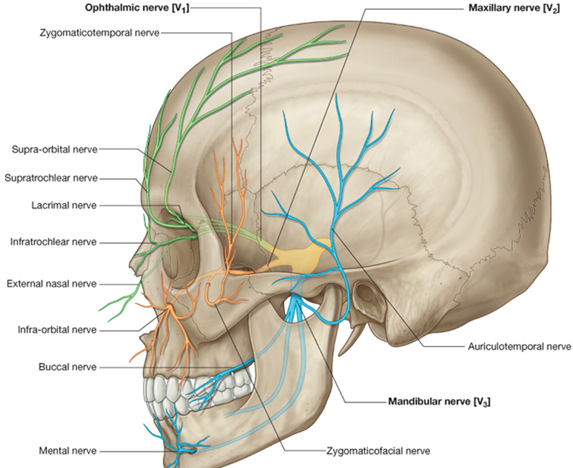 Marginal Mandibular Nerve Google Search Medical Pinterest