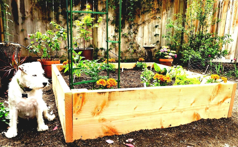 43 Raised Garden Beds Vegetables Backyards | Raised ...