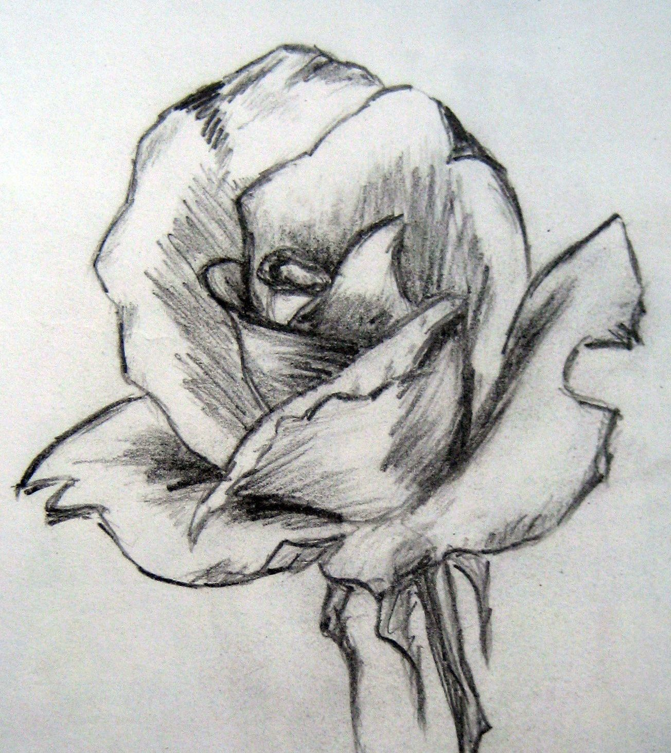 Easy pencil drawings of flowers art by prem com for Simple paintings to draw