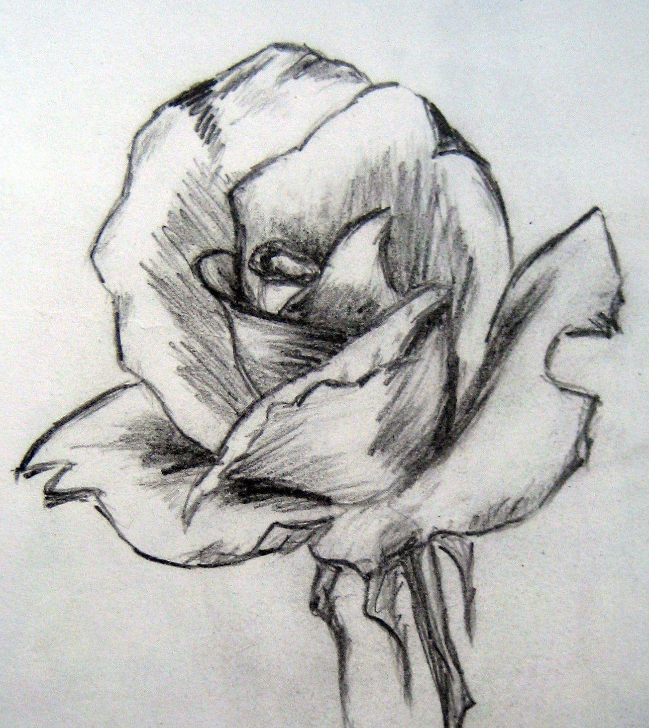Easy Pencil Drawings of Flowers Art By Prem (•) Com